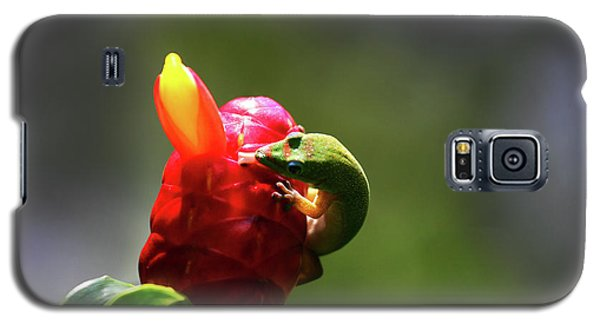 Galaxy S5 Case featuring the photograph Gecko #2 by Anthony Jones