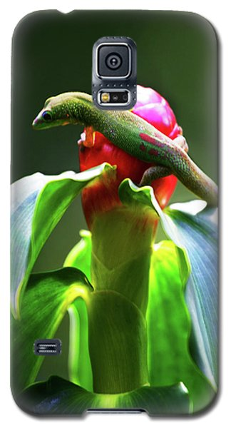 Galaxy S5 Case featuring the photograph Gecko #3 by Anthony Jones