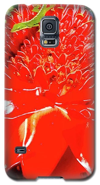 Gecko On Torch Ginger Galaxy S5 Case