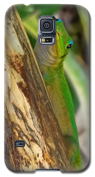 Gecko Up Close Galaxy S5 Case