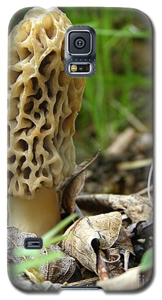 Galaxy S5 Case featuring the photograph Gem Of The Forest - Morel Mushroom by Angie Rea