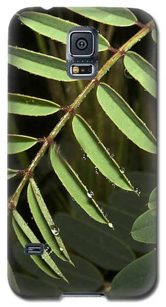 Gentle Morning Dew Galaxy S5 Case
