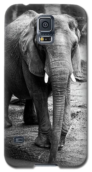 Galaxy S5 Case featuring the photograph Gentle One by Karol Livote