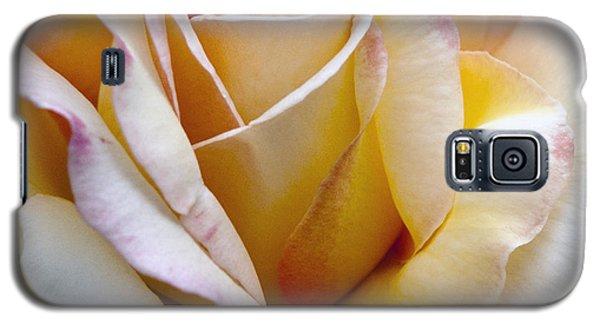 Gentle Swirls And Curls Galaxy S5 Case by Barbara Middleton