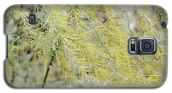 Galaxy S5 Case featuring the photograph Gentle Weeds by Deborah  Crew-Johnson