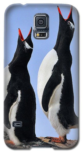 Gentoo Love Song Galaxy S5 Case