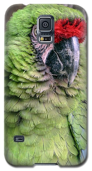 George The Parrot Galaxy S5 Case