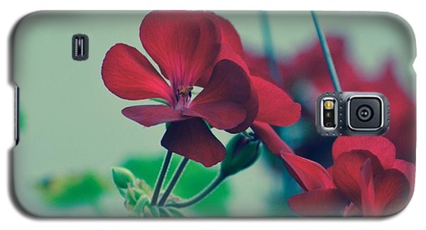 Galaxy S5 Case featuring the photograph Geraniums by Penni D'Aulerio
