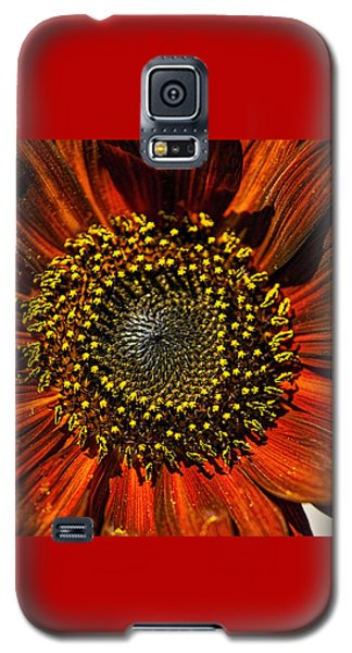 Gerber Daisy Full On Galaxy S5 Case