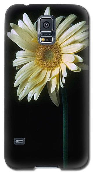 Gerber Daisy Galaxy S5 Case by Laurie Paci