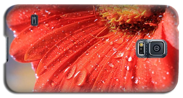 Gerbera Daisy After The Rain Galaxy S5 Case