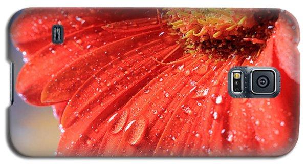 Gerbera Daisy After The Rain Galaxy S5 Case by Angela Murdock