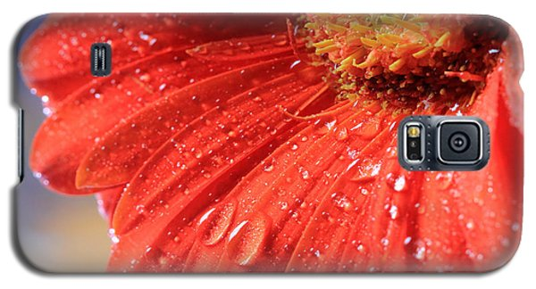 Gerbera Daisy After The Rain Galaxy S5 Case