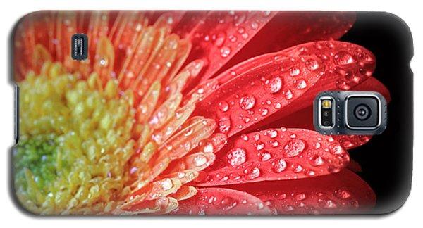 Gerbera Daisy Macro Galaxy S5 Case