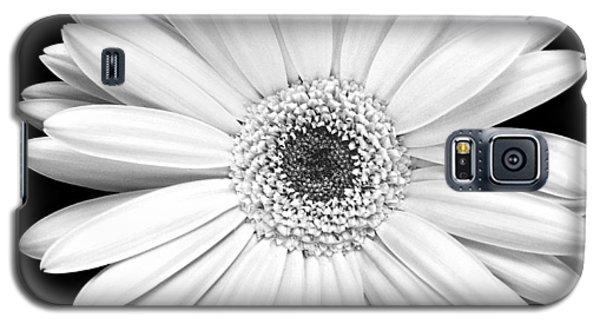 Single Gerbera Daisy Galaxy S5 Case