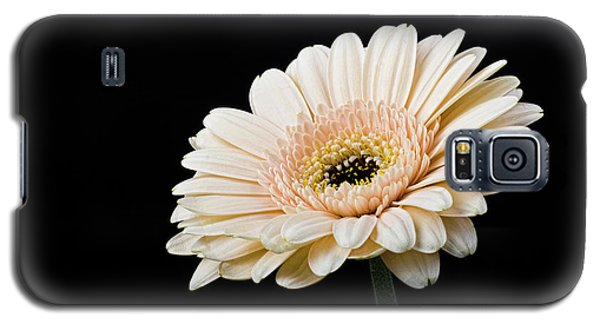 Galaxy S5 Case featuring the photograph Gerbera Daisy On Black II by Clare Bambers