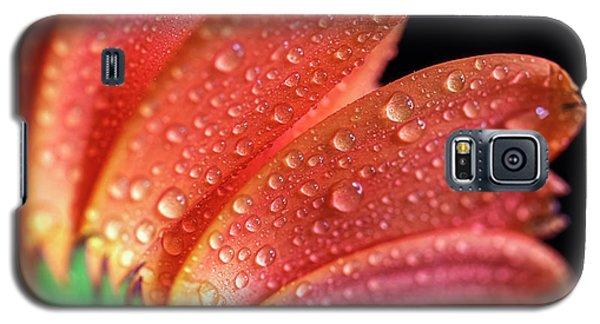 Gerbera Dew Galaxy S5 Case