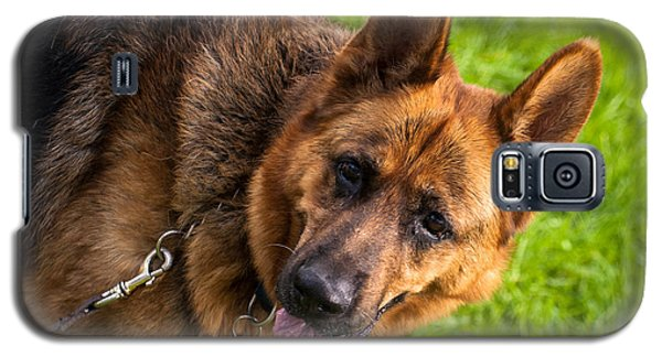 German Shepherd Heidi Profile Galaxy S5 Case
