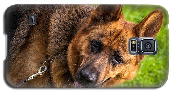 German Shepherd Heidi Profile Galaxy S5 Case