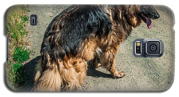 German Shepherd On Trail Galaxy S5 Case