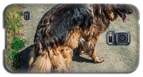 German Shepherd On Trail Galaxy S5 Case