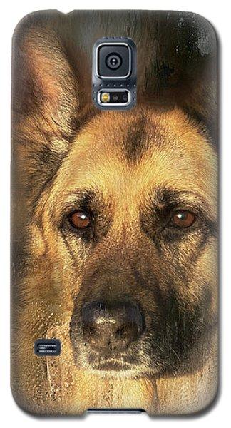 German Shepherd Portrait Color Galaxy S5 Case