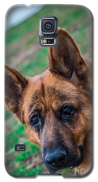 German Shepherd Profile Galaxy S5 Case