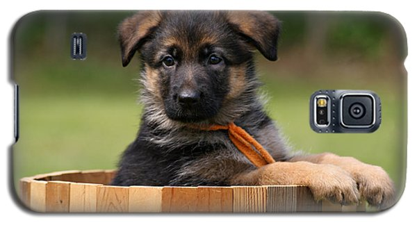 German Shepherd Puppy In Planter Galaxy S5 Case