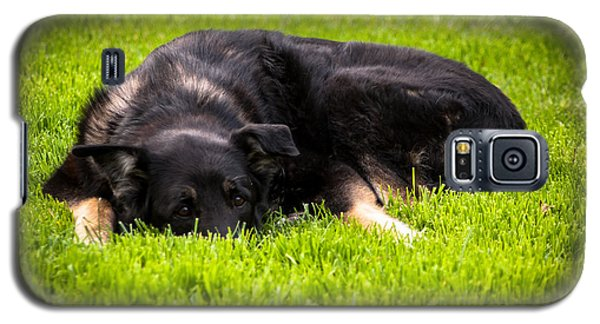 German Shepherd Sleeping Galaxy S5 Case