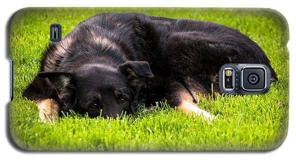 German Shepherd Sleeping Galaxy S5 Case