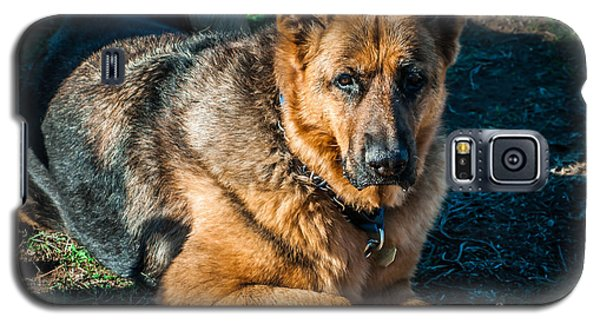 German Shepherd Sonoma Coast Galaxy S5 Case