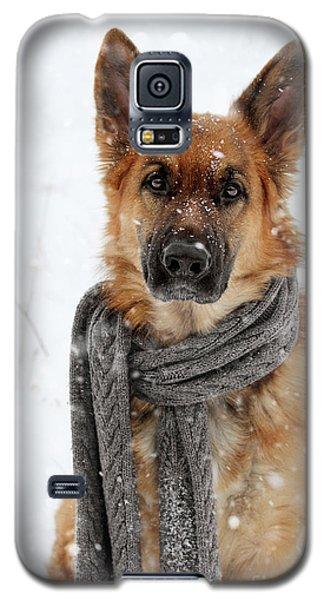 German Shepherd Wearing Scarf In Snow Galaxy S5 Case