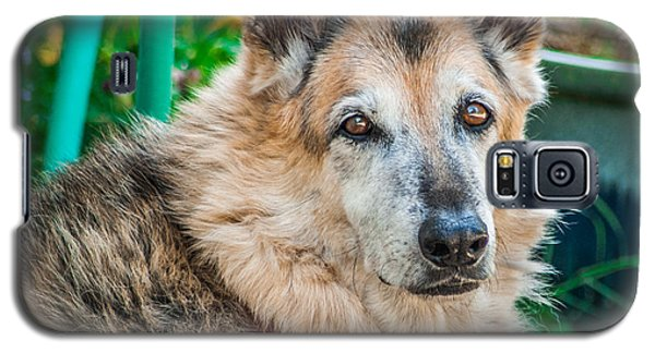 German Shepherd Woody Profile Galaxy S5 Case