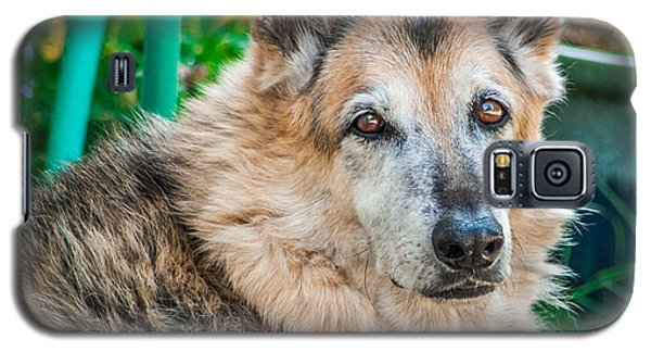 German Shepherd Woody Profile Galaxy S5 Case