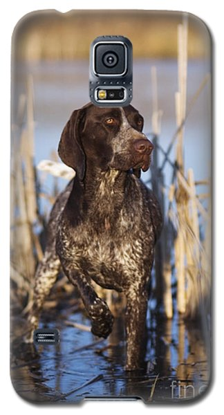 German Shorthair On Point -  D000897 Galaxy S5 Case