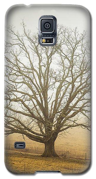 Tree In Fog - Blue Ridge Parkway Galaxy S5 Case