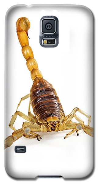 Giant Desert Hairy Scorpion Looking Into Camera Galaxy S5 Case