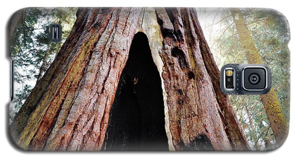 Giant Forest Giant Sequoia Galaxy S5 Case