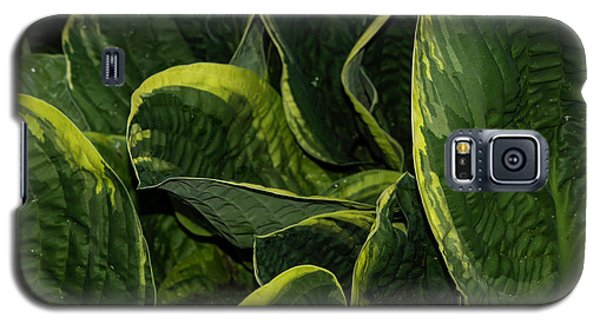 Giant Hosta Closeup Galaxy S5 Case