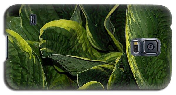 Giant Hosta Closeup Galaxy S5 Case