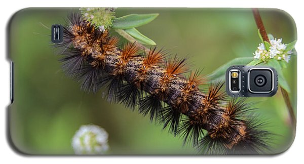 Giant Leopard Moth Caterpillar Galaxy S5 Case
