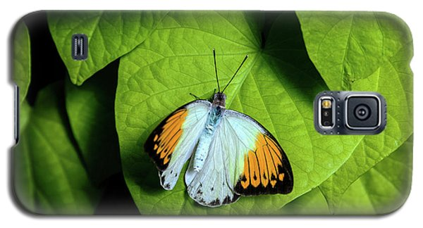 Galaxy S5 Case featuring the photograph Giant Orange Tip Butterfly by Tom Mc Nemar