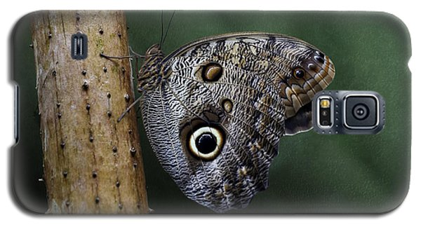 Giant Owl Butterfly On Screw Pine Galaxy S5 Case