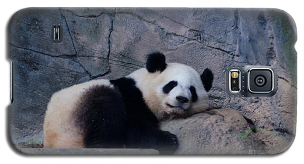 Giant Panda Galaxy S5 Case by Donna Brown