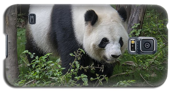 Galaxy S5 Case featuring the photograph Giant Panda by Wade Aiken