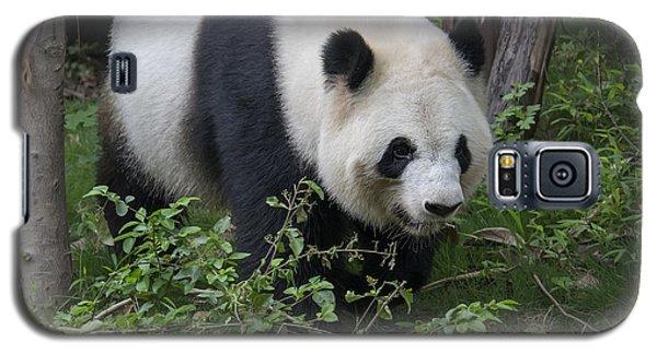 Giant Panda Galaxy S5 Case by Wade Aiken