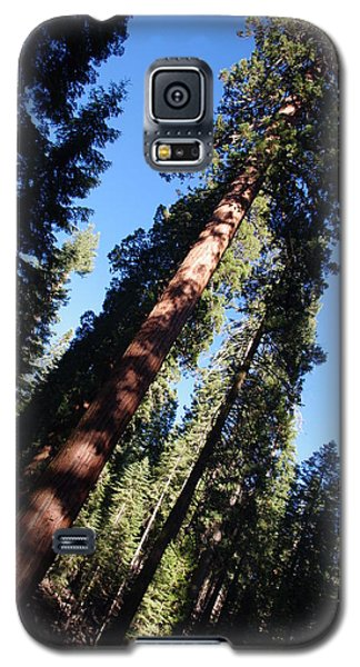 Giant Redwood Trees Galaxy S5 Case