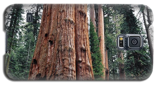 Galaxy S5 Case featuring the photograph Giant Sequoia II by Kyle Hanson
