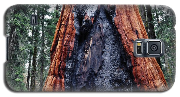 Galaxy S5 Case featuring the photograph Giant Sequoia by Kyle Hanson