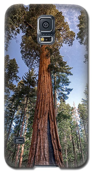 Giant Sequoia Galaxy S5 Case by Phil Abrams
